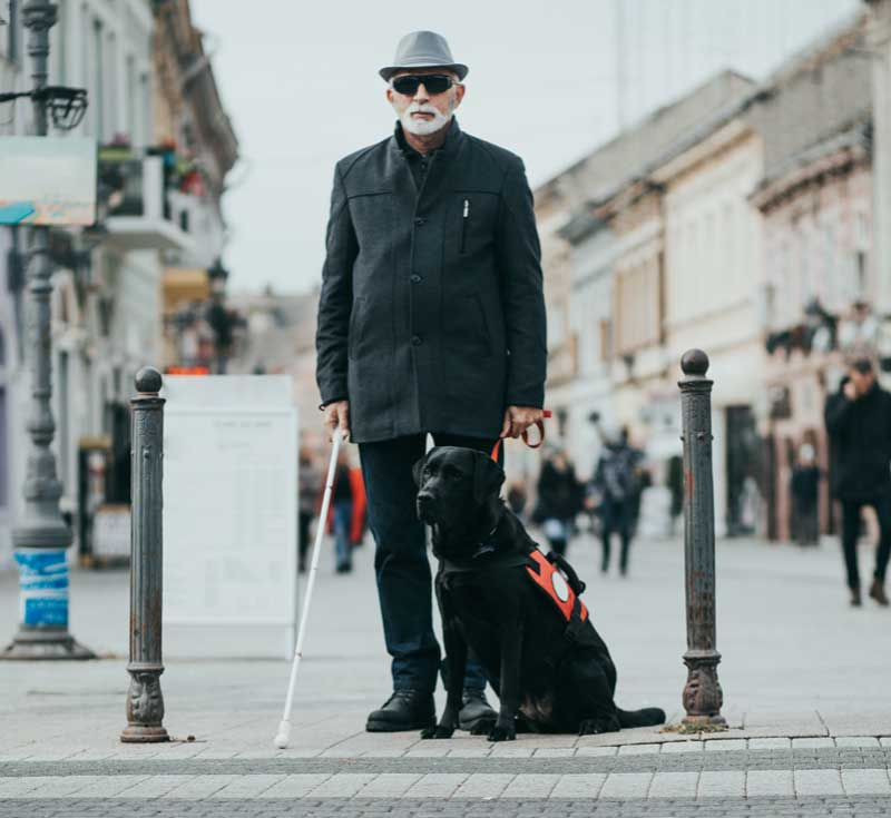 elderly man with white cane and seeing eye dog stand in the middle of european street