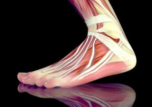 Flat feet va disability issues presented anatomically